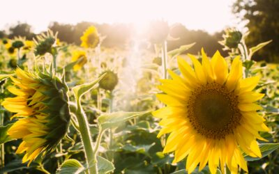 Low Vitamin D and Health